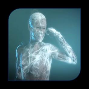 représentation des fascias dans le corps